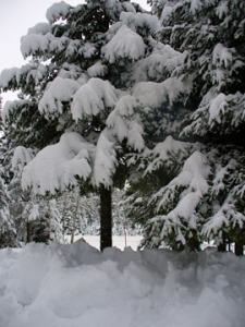 Lots of snow in trees.