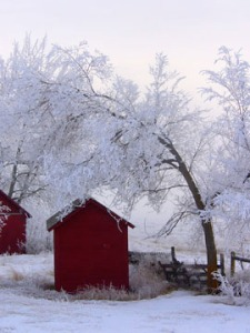 Frozen fog on trees over red shed.