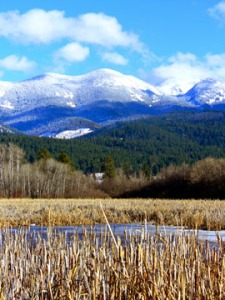 Cattails and snow cap mountains.