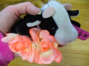 LuLu the little cow.