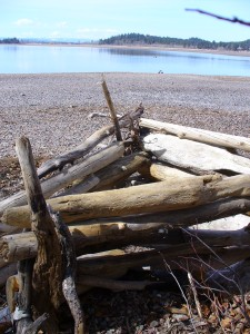 Drift wood fort.